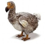 Le dodo et la crise silencieuse