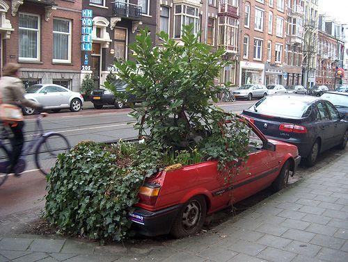 Un arbre dans une voiture
